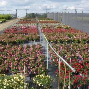 Horticulture et pépinière